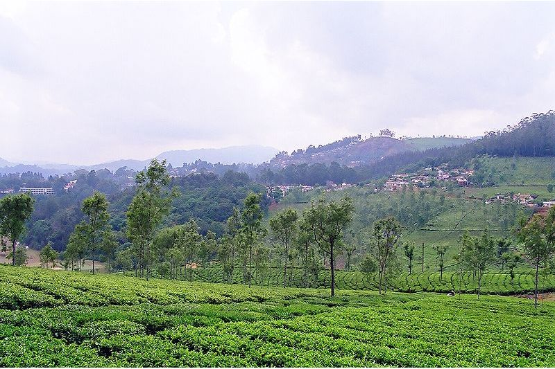 Blissful Ooty & Bandipur